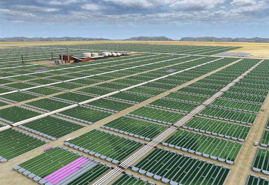 algae_farm.jpg